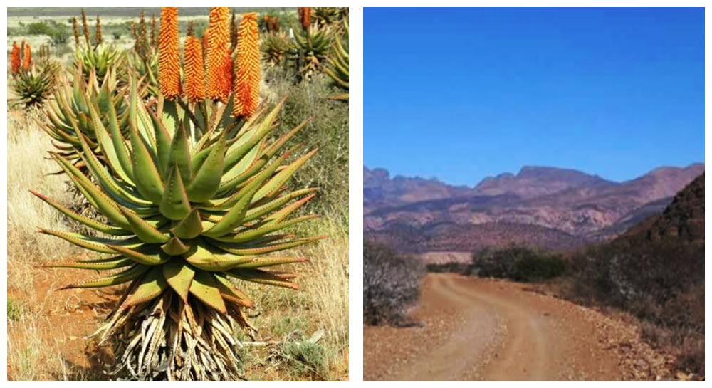 Hills and cactus in Steytlerville and surrounding areas